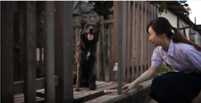 amazing dog love story