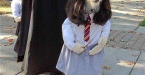 amazing dog photobomb 1