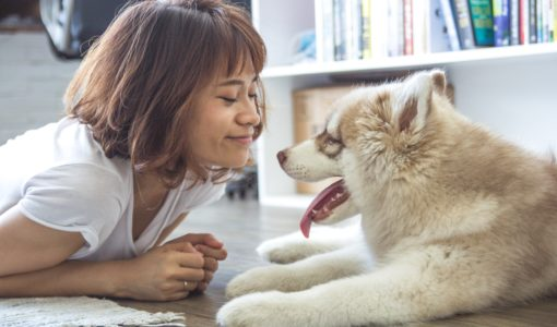 why we need pets in our homes